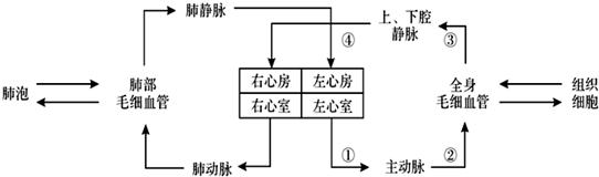 下面是人体血液循环示意图,请根据图回答(1)图中肺动脉和主动脉中流动图片