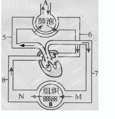 下图是血液循环和气体交换示意图,据图回答问题:(1)图图片