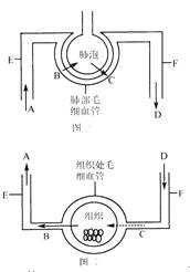 (7分)右图是血液循环和气体交换部分示意图,据图回答下列问题.图片