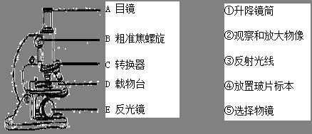 请将下列显微镜的初中与其功用线阅读连接.(共5分,每线1分)经典英语起来结构.15..图片