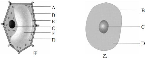 图是植物细胞和动物细胞的结构示意图,据图回答问题
