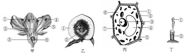 下面是与桃树有关的示意图或结构模式图,请据图回答有