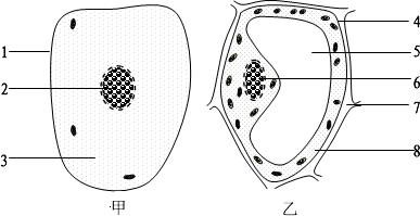 下面是植物细胞和动物细胞的结构示意图,据图回答问题:(1)属于植物细胞的是图______,属于动物细胞的是图____ - 上学吧找答案