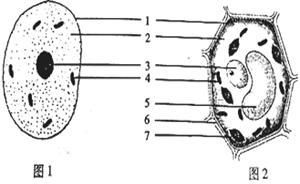细胞是构成生物体的基本结构和功能单位。下图示动、植物细胞结构模式图,请据图回答下列问题:(1)图示植物细胞 - 上学吧找答案