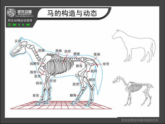 flash绘图技巧:四足动物运动规律之马的