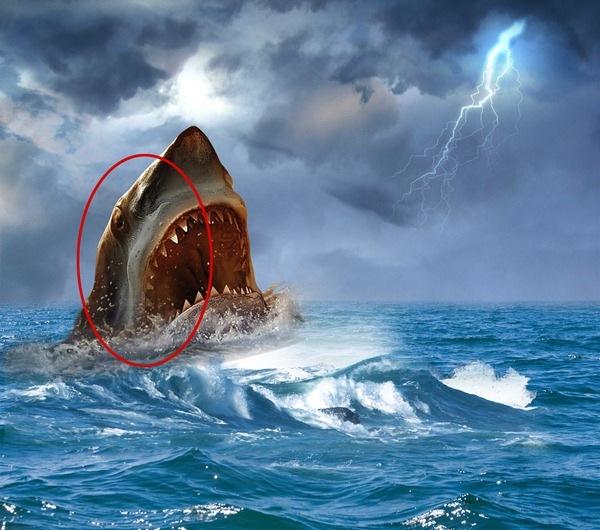 鲨鱼手绘ps