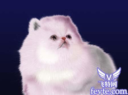 photoshop鼠绘可爱的白色小猫