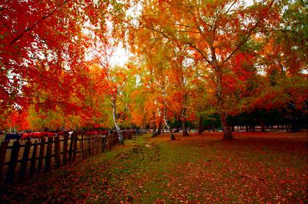 抠图背景素材 风景树