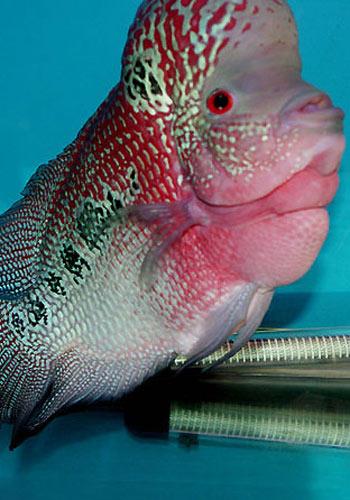 看看我的滤材水族器材 西安龙鱼论坛 西安博特第3张