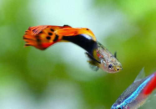 减少鱼体内寄生虫六个注意