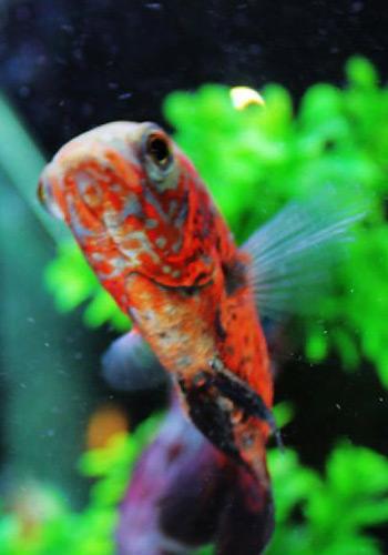 减少鱼类寄生虫的六个方法
