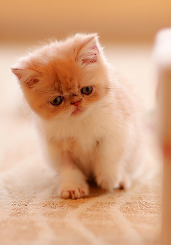 怎么样猫咪才能不乱抓家具