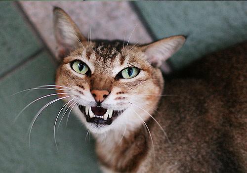 猫喉咙结构图