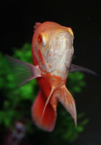 减少鱼寄生虫六个注意事项