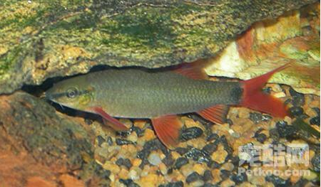 寄生虫对鱼类的影响及危害