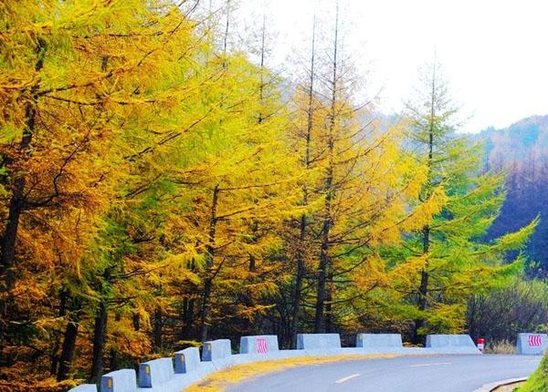 从西安出发,沿着210国道从沣峪口进入秦岭,一路南下,就可开始一段