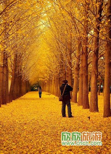 手绘树下古装情侣