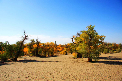 金色胡杨林 孤傲的沙漠守望者 额齐纳胡杨林旅游攻略