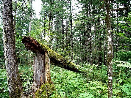 绿意葱茏 盘点国内十大森林氧吧图片