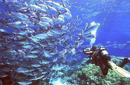 太平洋海底世界拥有上百种海洋生物为