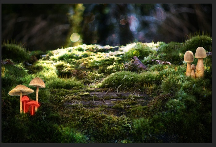 ps合成经典梦幻森林中的魔法小公主