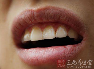 牙齒分類結構圖