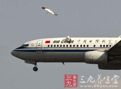 飞机撞小鸟图片大全