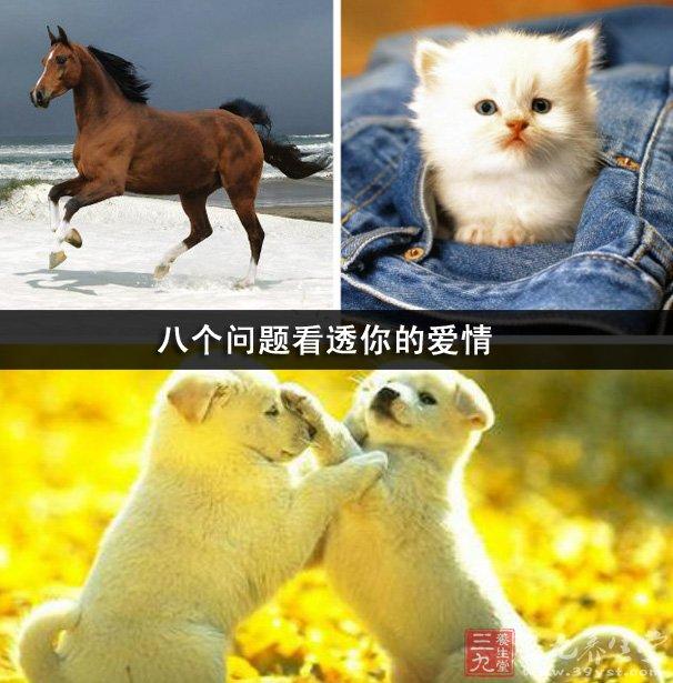 八个步骤画动物